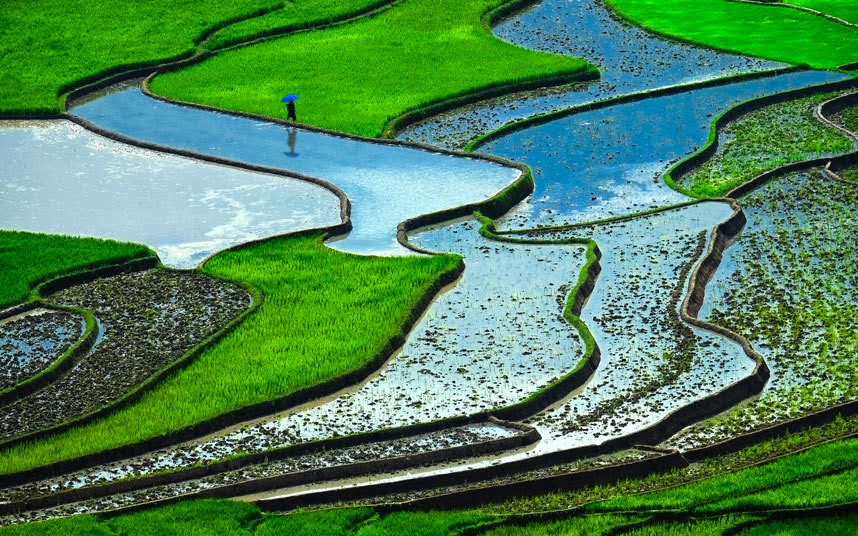 Rice terraces, Vietnam The rice paddies in Vietnam form one of the most striking green landscapes in the world. The country is the second largest exporter of rice in the world.