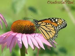 Como una flor con su mariposa en primavera..