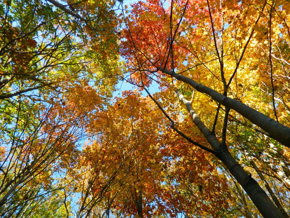 Autumn foliage Taylor Creek Park by garden muses-not another Toronto gardening blog
