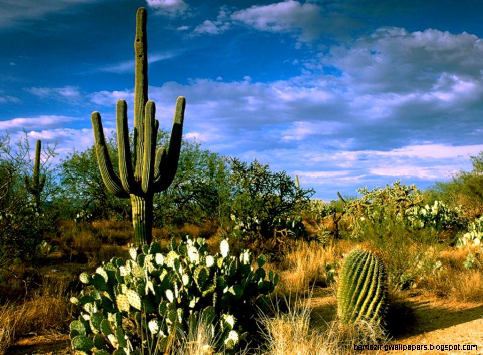 Desert Cactus  cacti cactus in the desert  Cactus  Pinterest
