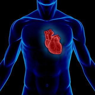 إكتشاف دواء جديد لإعادة إصلاح القلب بعد الأزمات القلبية