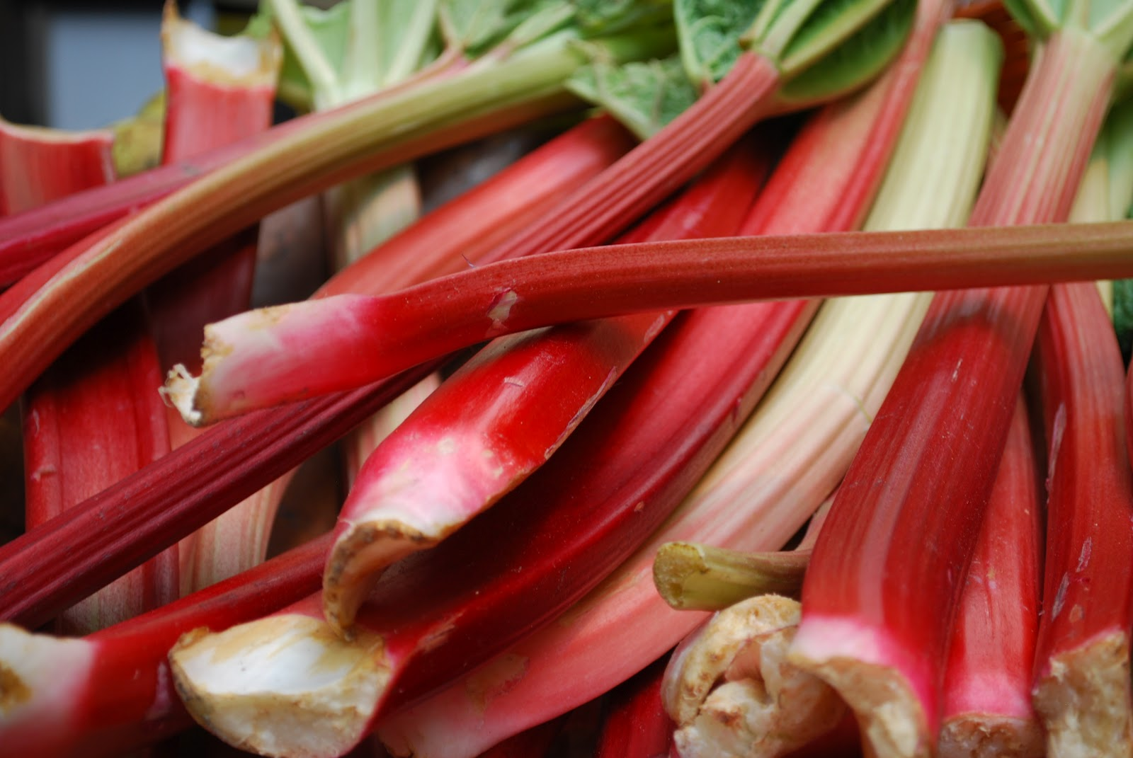 Eating Away At Arthritis Why Rhubarb Can Be A No No On The