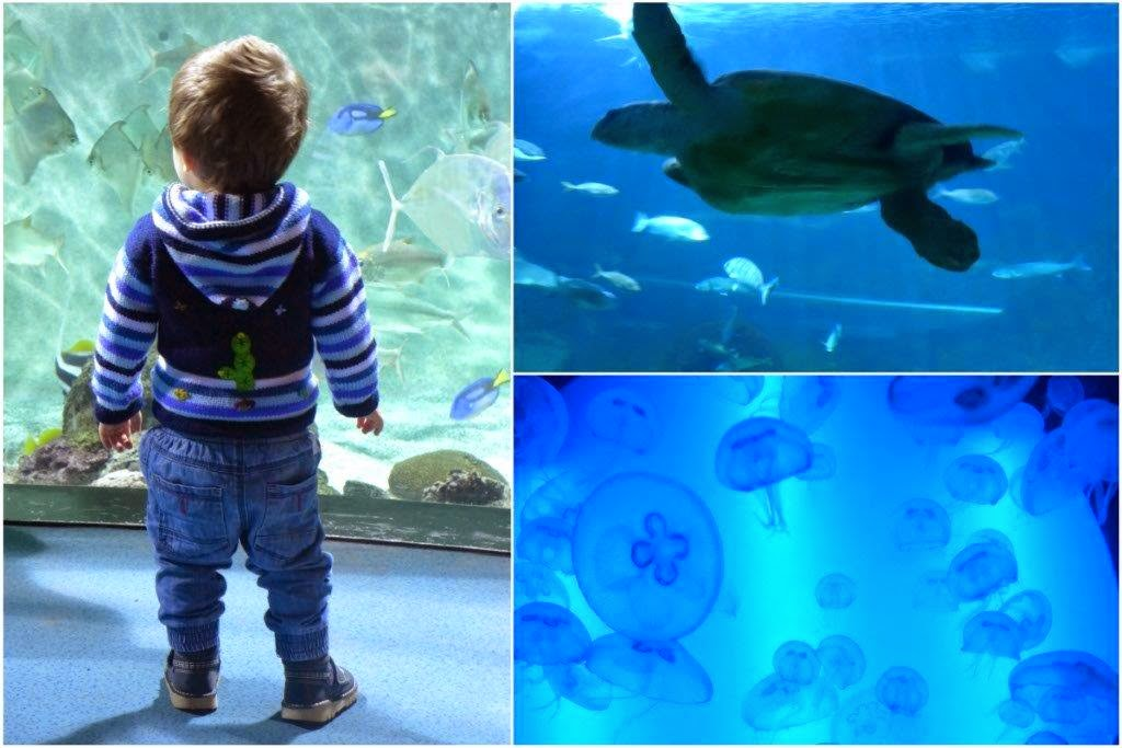 Nino ante peces, tortuga marina, medusas en el Acuario de Gijon