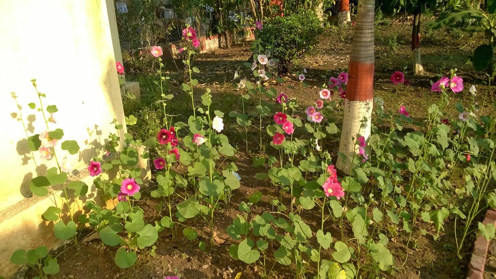 PMC garden, pune, udyan, park