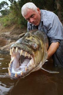 سمكة النمر: الأكثر خطورة في العالم  2