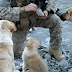 A Soldier Made Friends With 3 Dogs. But He NEVER Expected This When A Bomb Went Off…