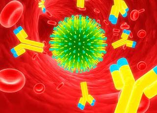 Апоптоз и иммунный ответ