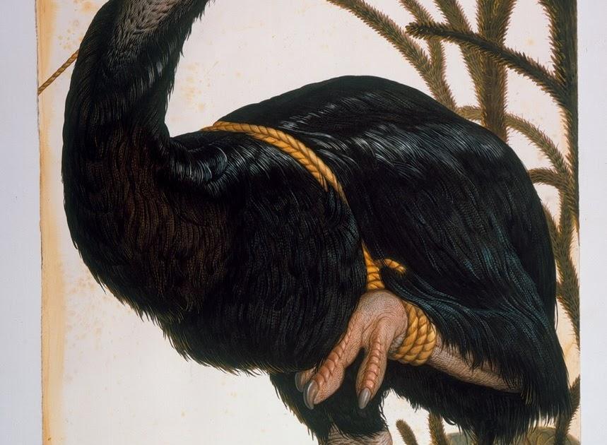 walton ford bird
