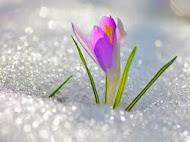 Нам весна посылает привет!