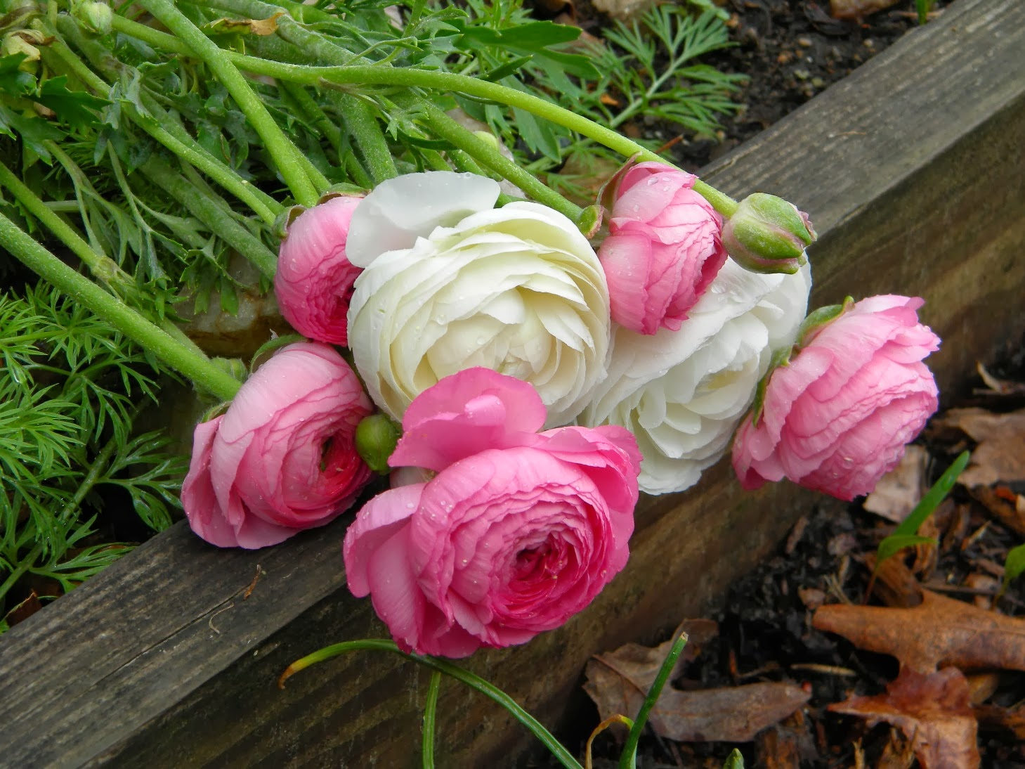 Wedding Flowers from Springwell Ranunculus and Anemones for Spring Weddings