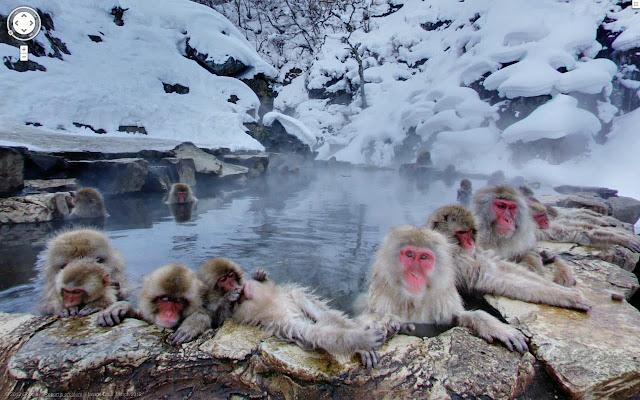 monkeys on street view