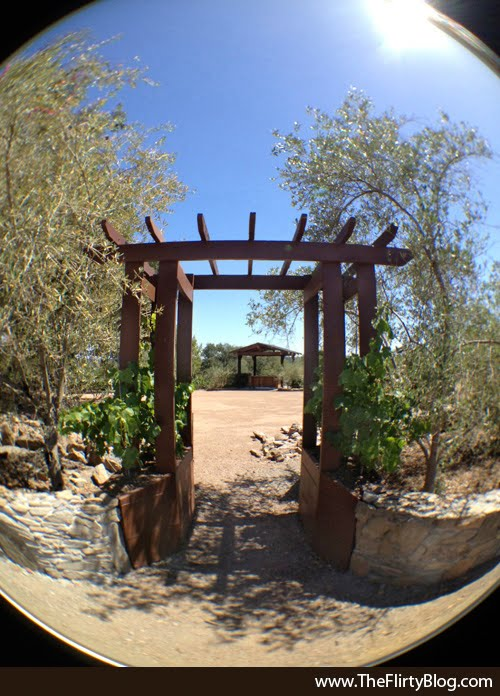 Entrance, Weddings, Upper Terrace, Thomas George Winery