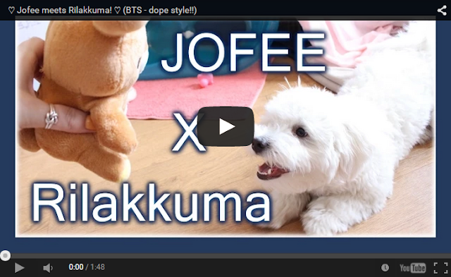 Jofee meets Rilakkuma maltese dog puppy cute kawaii kawai japan relax bear killer youtube video plush