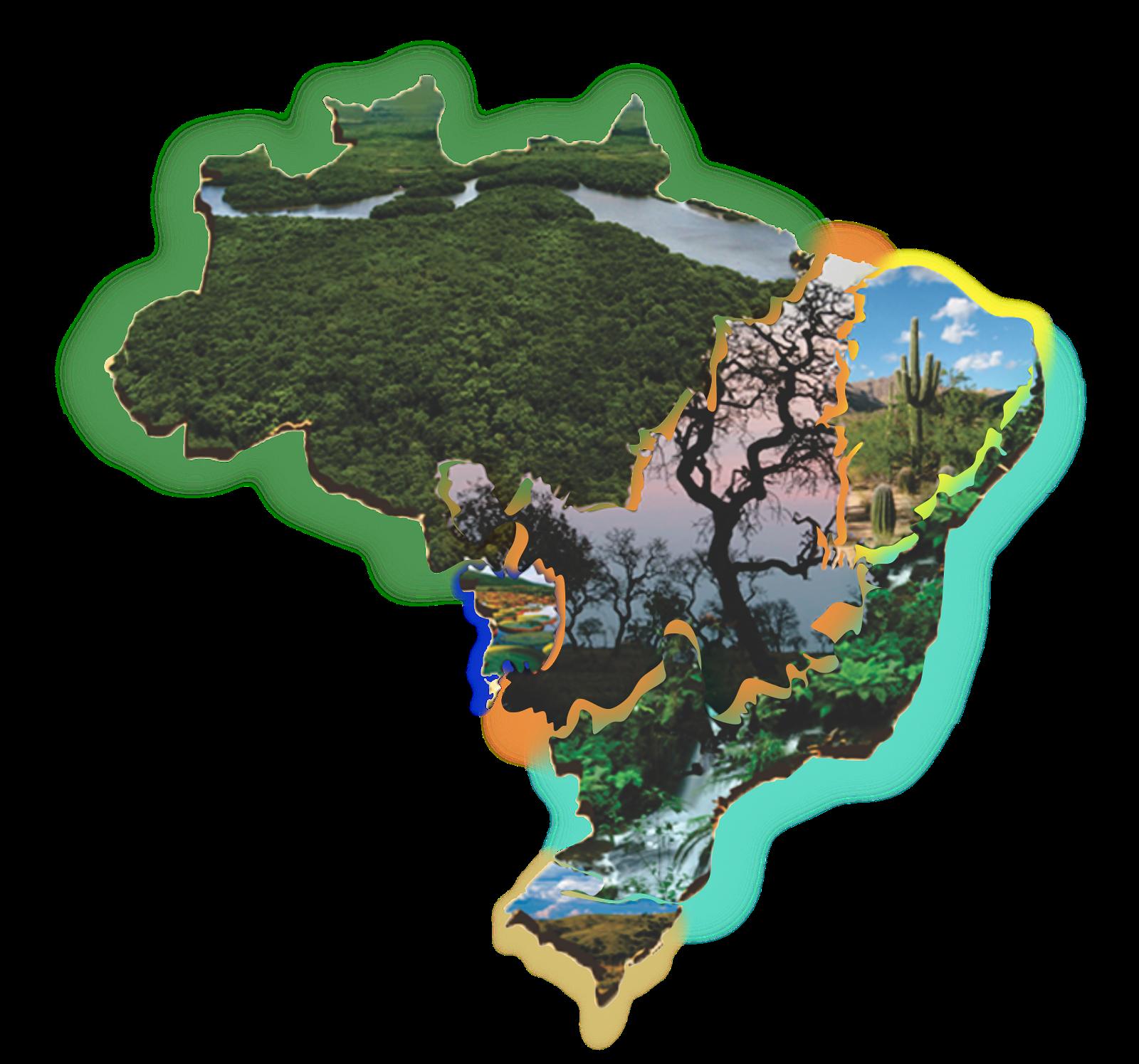 ESPECIAL CAMPANHA DA FRATERNIDADE