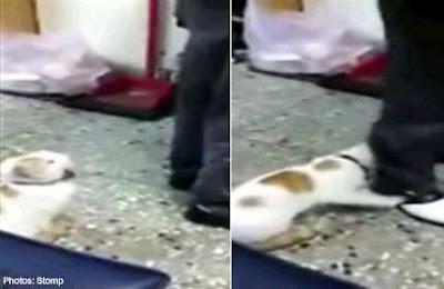 Seekor kucing menggigit seorang ayah untuk menyelamatkan seorang anak dari dipukul
