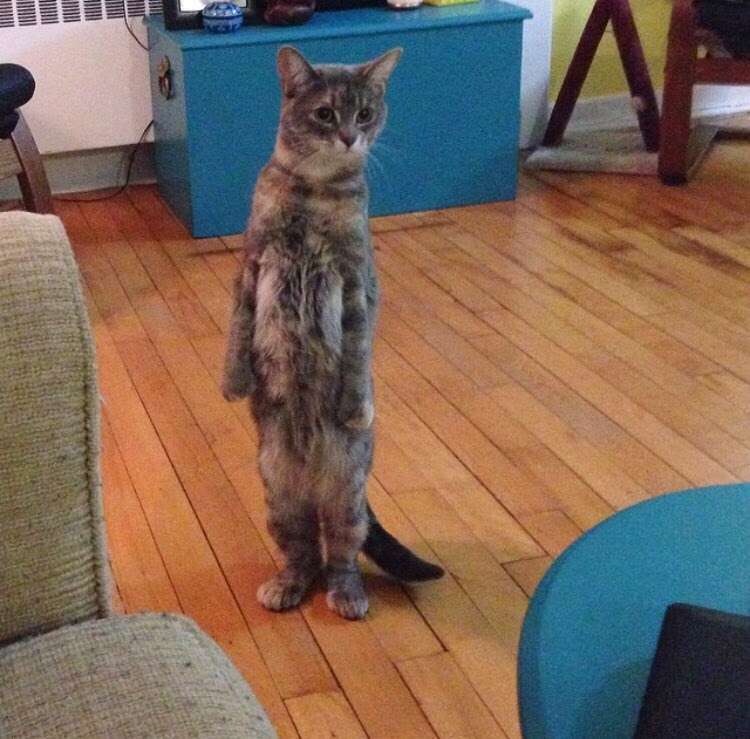 Funny cats, cat photo, cute cat, cat pictures