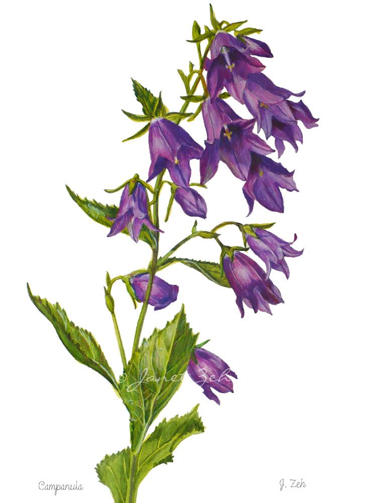 Oil Painting Flowers Campanula
