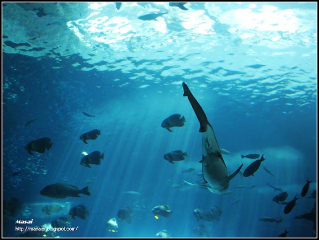 墾丁海生館-鯊魚