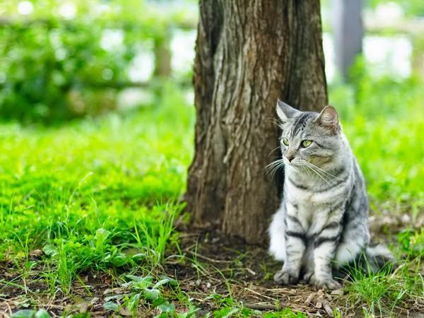 Берем кота на природу