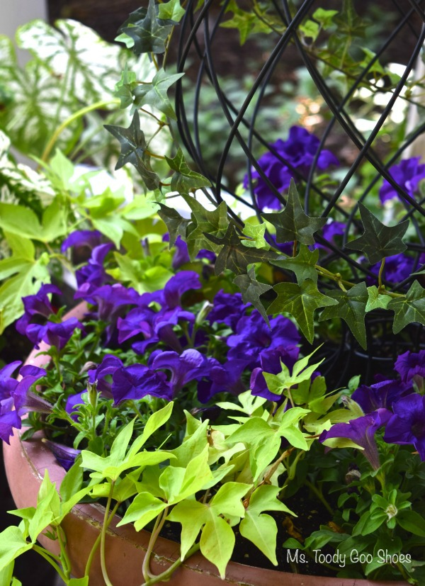 Pretty Container Gardens...As Easy as 1-2-3 | Ms. Toody Goo Shoes