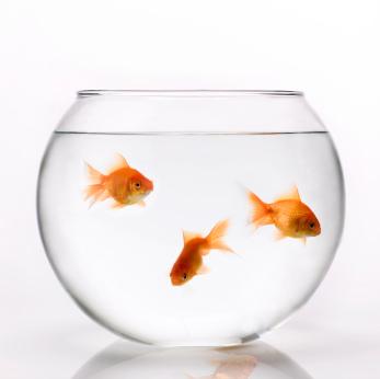 Inetgiant blog november 2012 for Aquarium original poisson rouge
