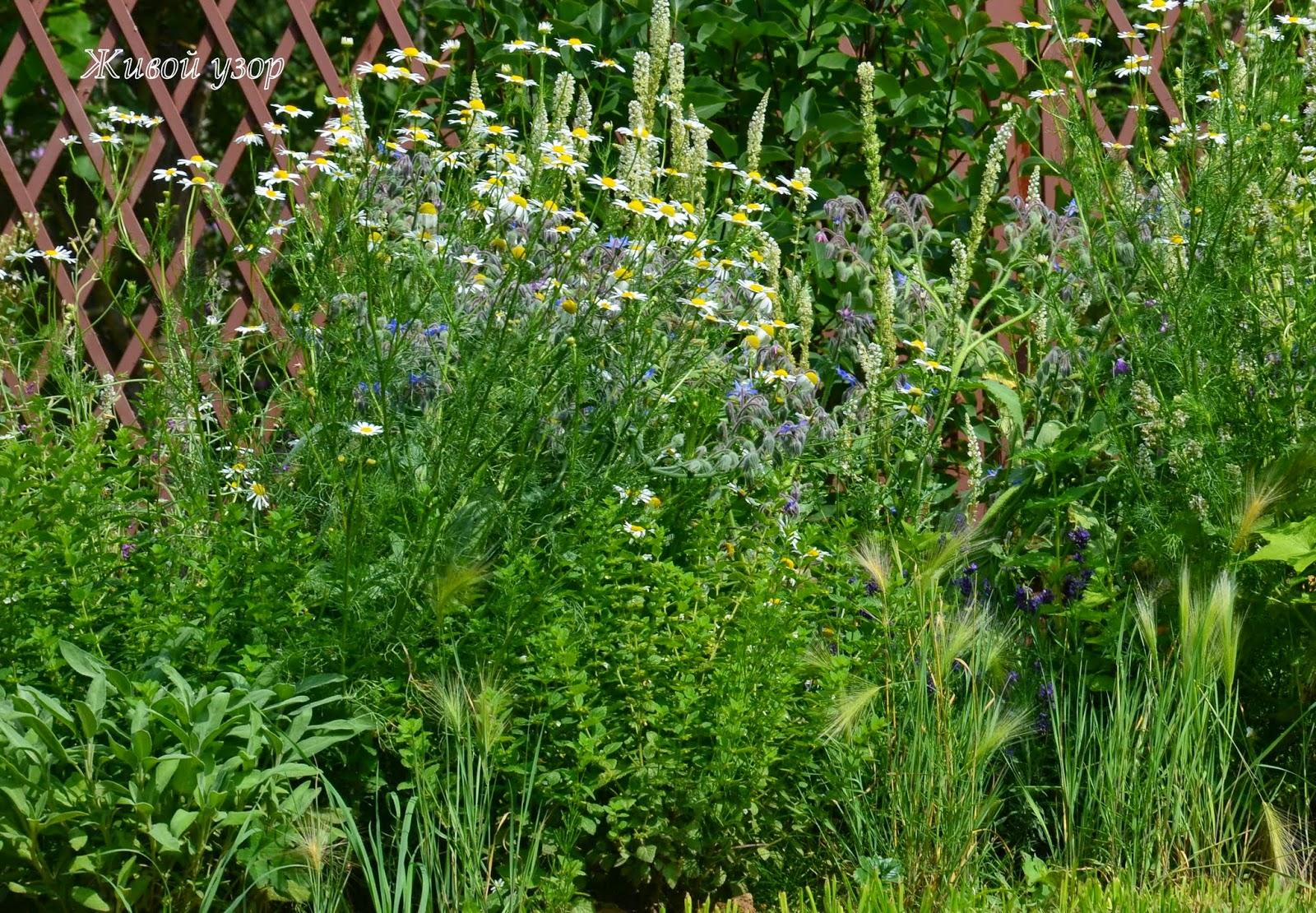 ароматные травы