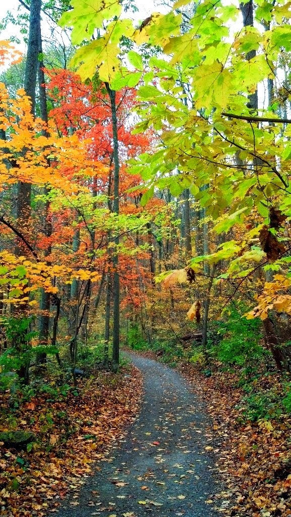 Patuxent trail