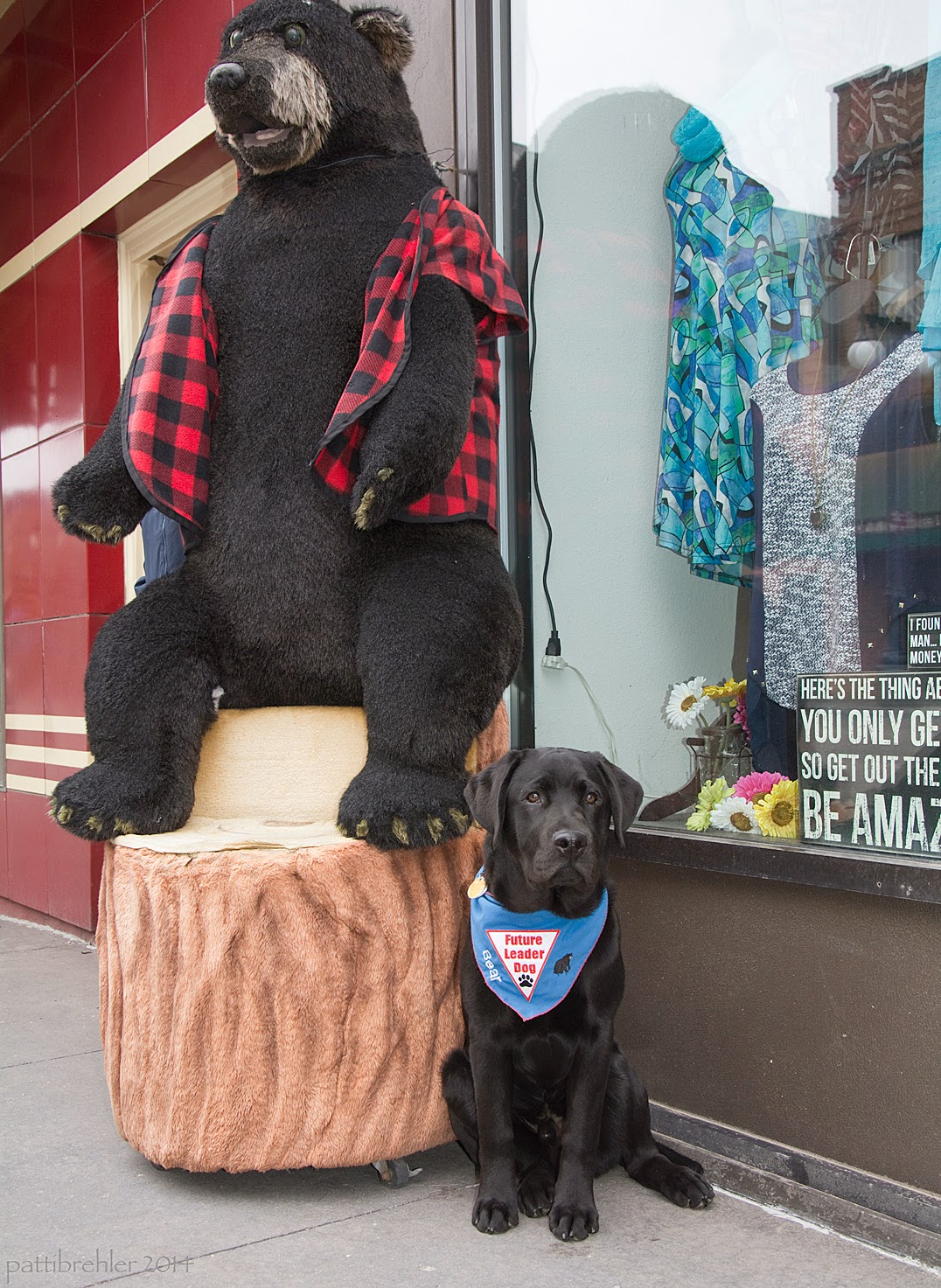 A black lab puppy is sitting on the sidewalk in front of a store's clothing display window, next to a wooden statue of a black bear. The bear is sitting on a tree stump and is wearing a red plaid shirt. The puppy is wearing a blue Future Leader Dog bandana.
