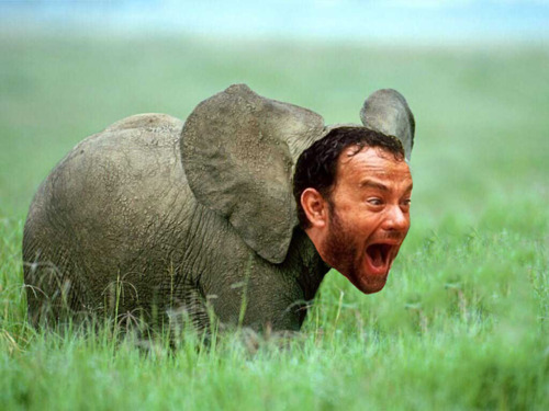 Funny Tom Hanks is an Animal(s)Photos | All Funny