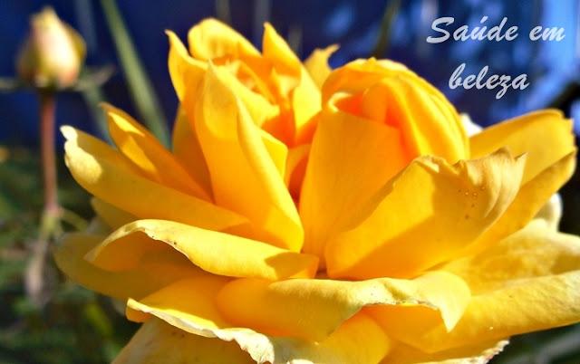 Terapia das rosas na saúde