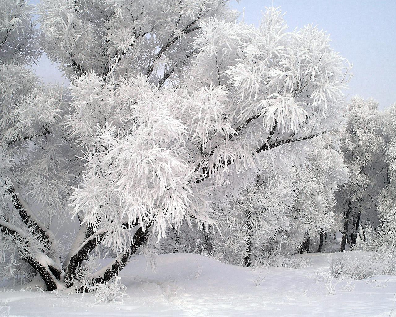 Пятница 2 декабря 2011 г
