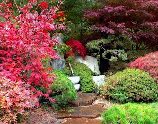 camino con flores de colores
