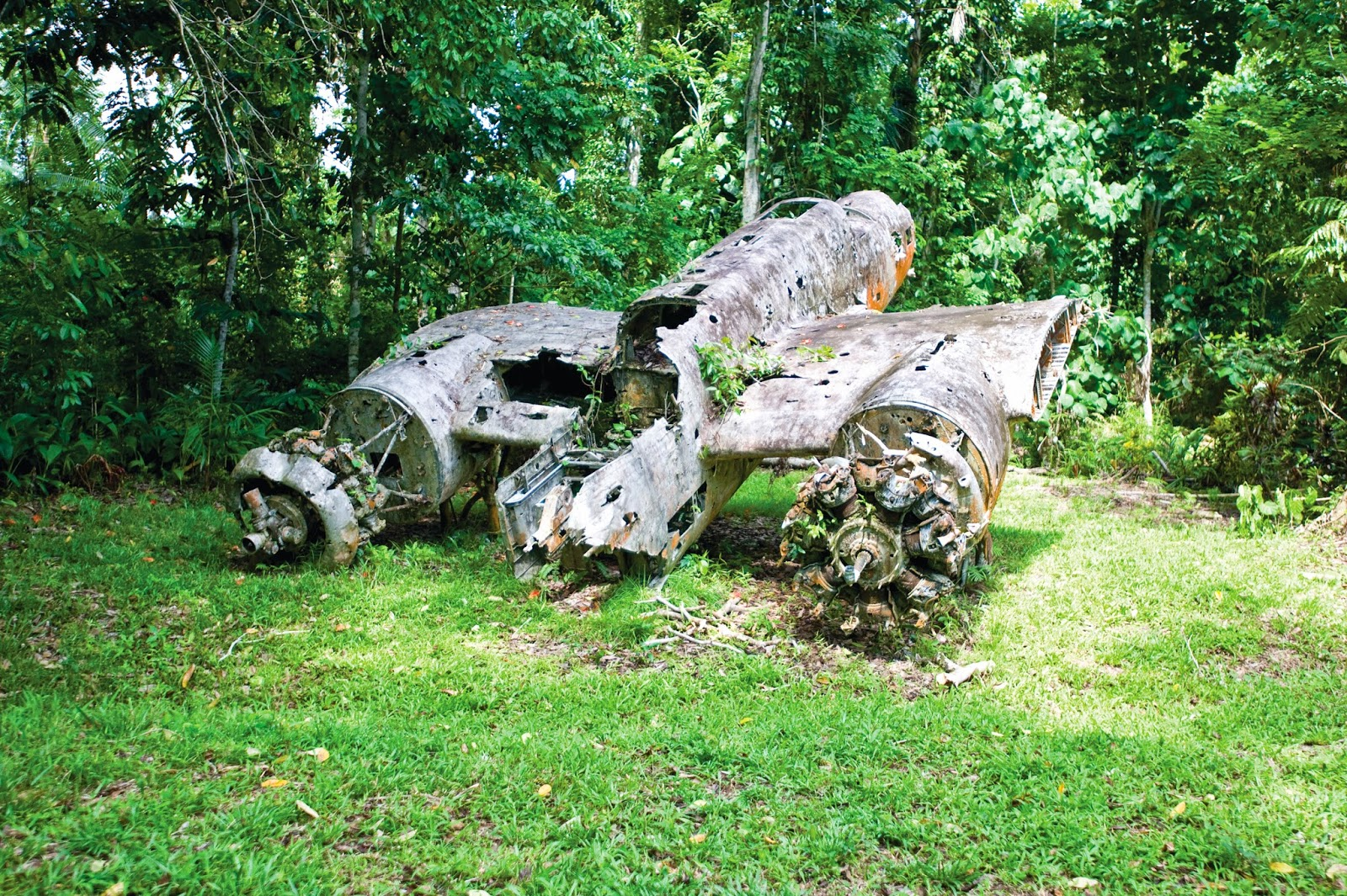 A World War II plane wreck near Madang, Papua New Guinea