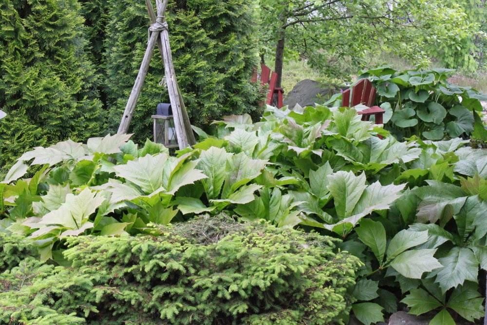 Trädgård O Sånt : Faster fasansfull Öppna trädgårdar