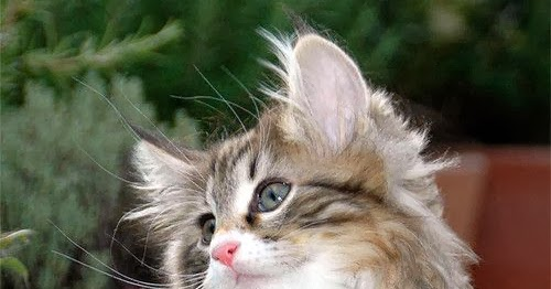 2016 kitten bowl