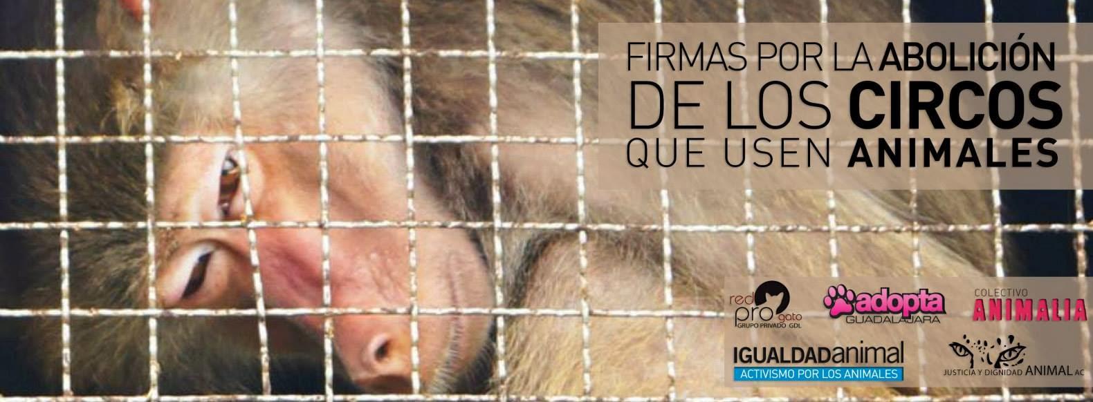 FIRMA por la abolición de los circos con animales