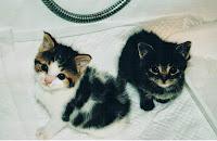 I gatti da adottare !