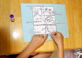 First, Tessa put together a paper puzzle and labeled the parts and functions of the pictured plant.