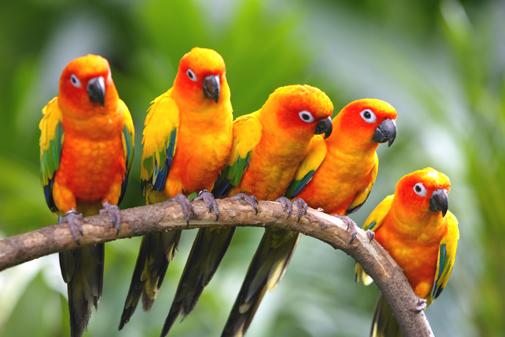 Exotic birds from brazil exotic birds flying exotic birds exotic