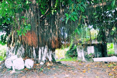 Alrededores de Tlapacoyan, Veracruz