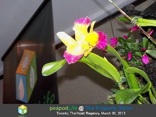 PeapodLife EcoSystem's Orchid at The Property Show, Toronto, 2013, photo by Olga Goubar