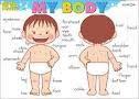 BODY PARTS (INFANTS...)