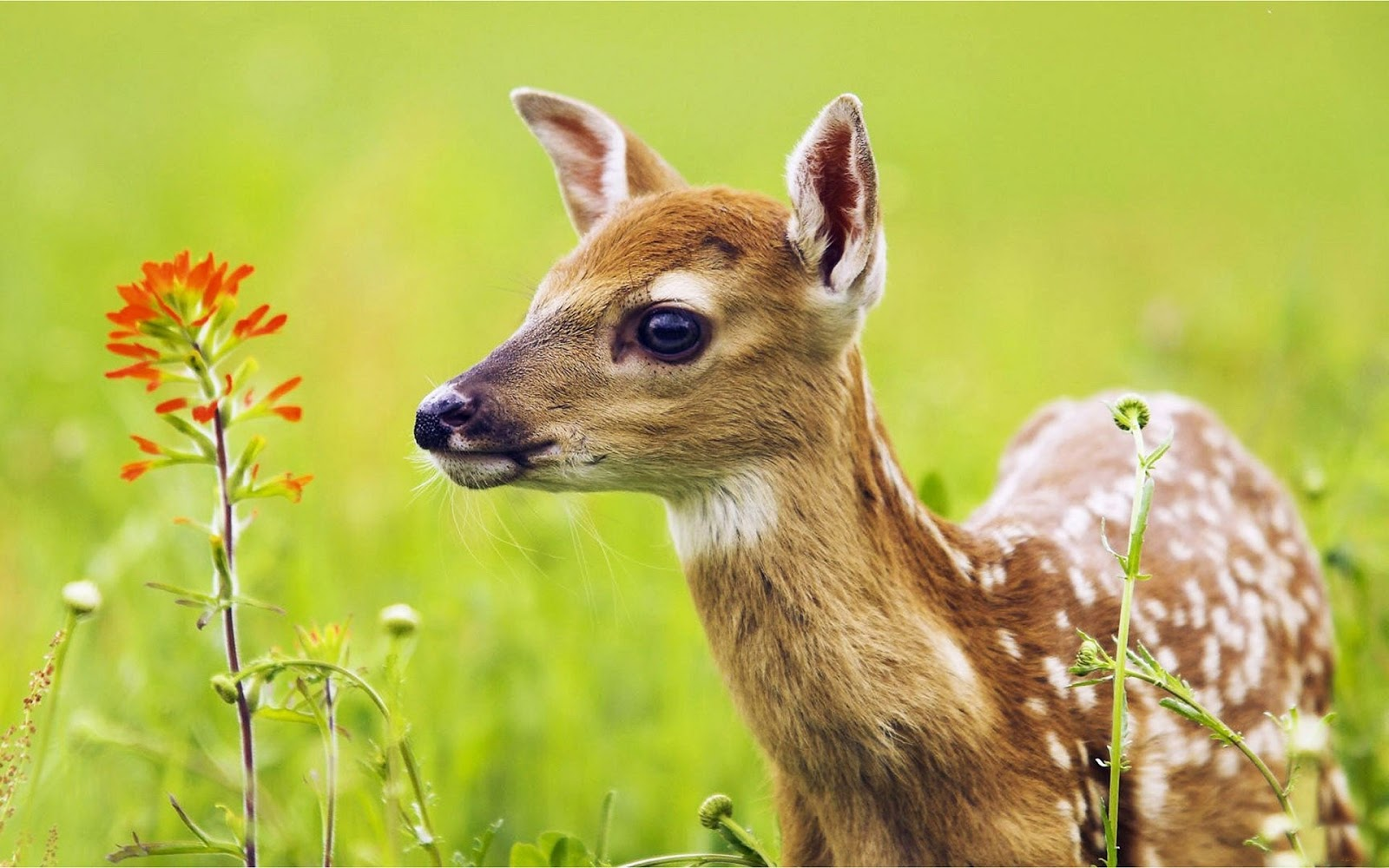 Deer Wallpapers Android Apps on Google Play HD Wallpapers