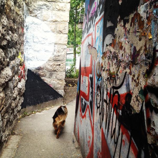 Zürich Jogging Hund