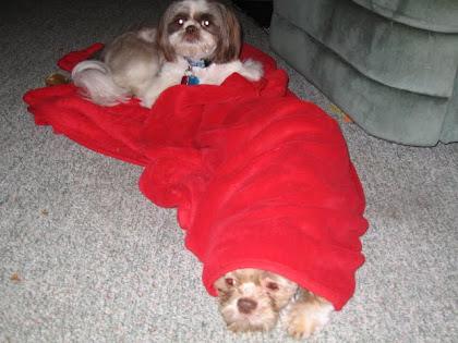 Coochie & Tazzie