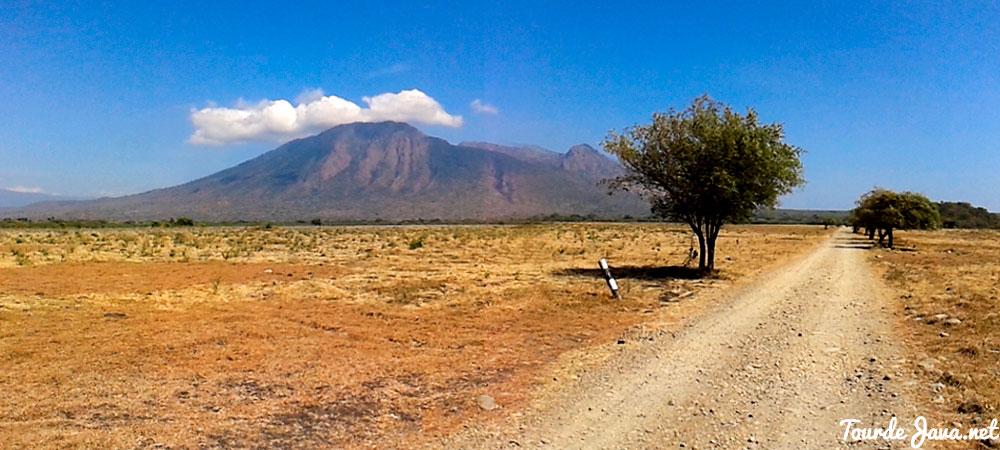 padang savana baluran dengan latar gunung baluran