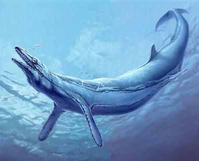 cetaceos prehistoricos Basilosaurus
