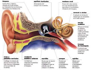 imágenes de oído