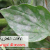 Common plant fungal diseases (Arabic)