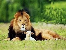 Con Cristo El Leon De Juda